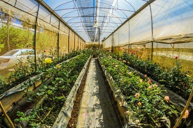растения в оранжерия